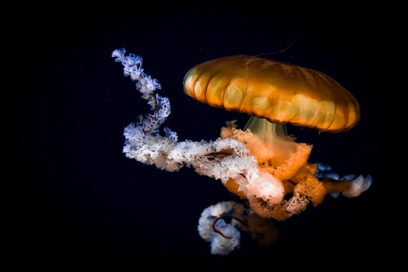 Aquarium 072.jpg