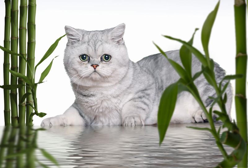 white-kittenlr5.jpg
