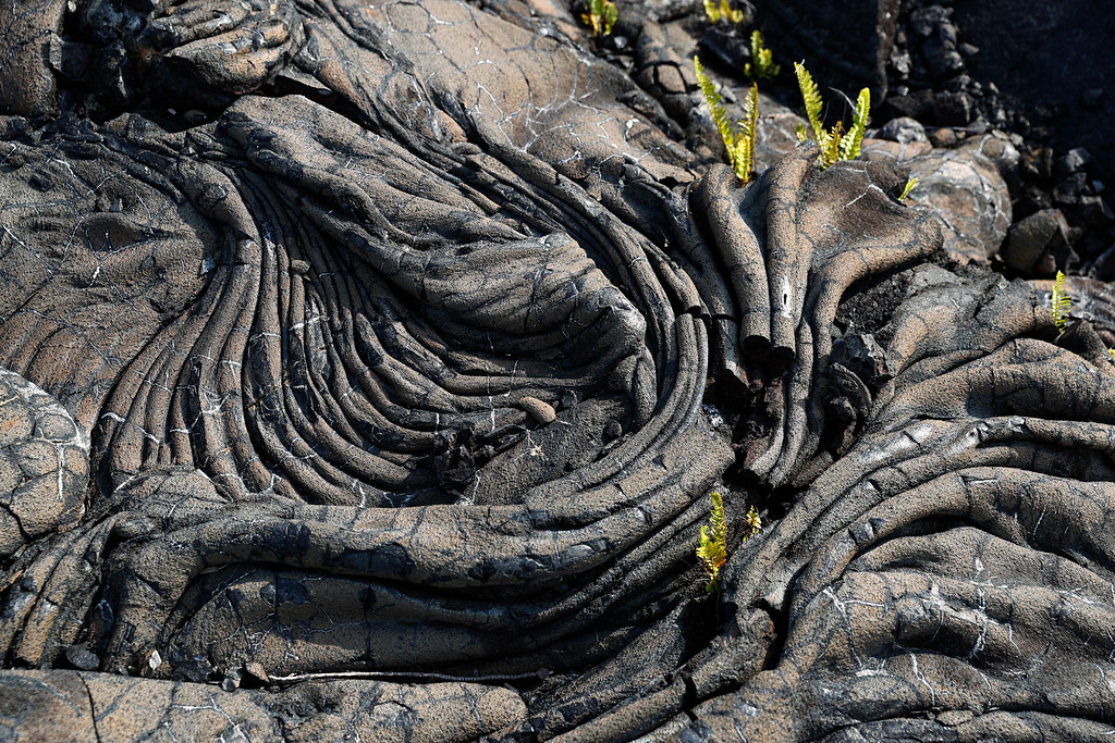 . This photo shows some of the 1990 lava flow from Kilauea, one of the world\'s most active volcanoes, Sunday, May 6, 2018, in Kalapana, a town south of the Leilani Estates subdivision, Hawaii. Hawaii officials said the decimated homes were in the subdivision, where molten rock, toxic gas and steam have been bursting through openings in the ground created by the Kilauea volcano. (AP Photo/Marco Garcia)