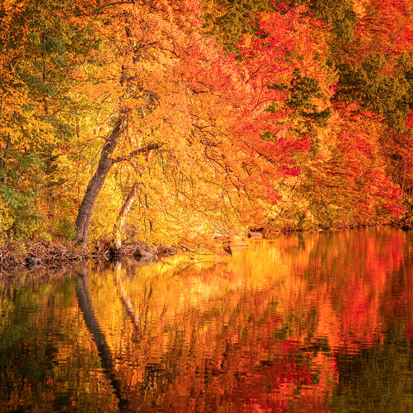 Fall reflections in Lincoln Woods, Rhode Island