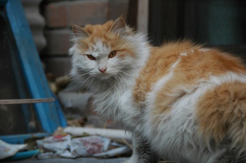 Angry Cat - Beijing, China