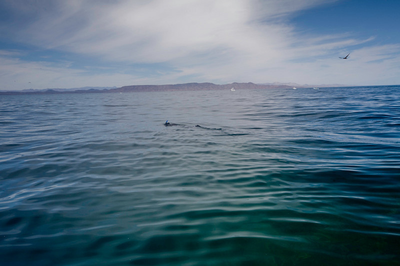 20090420_Underwater_Mexico_0273.jpg