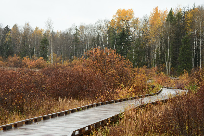 The Cranberry Marsh Boardwalk