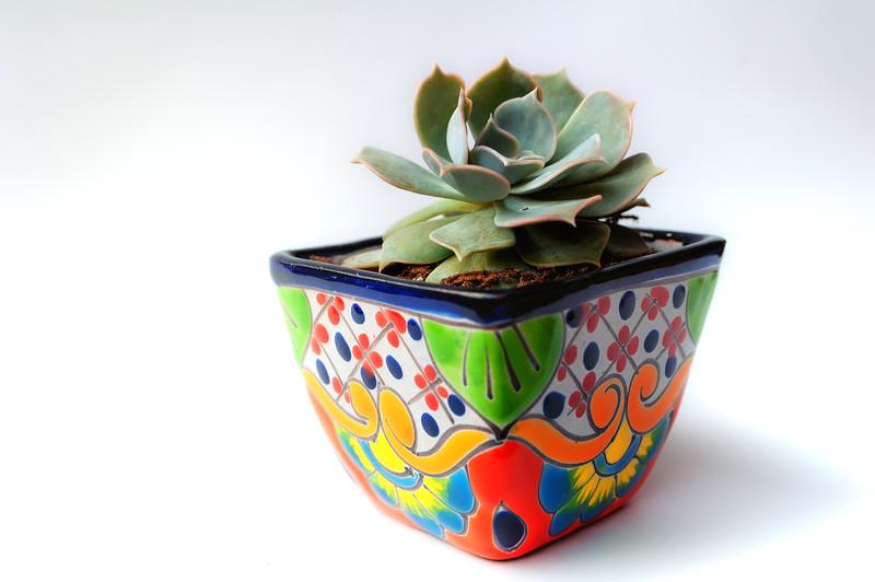 Mexican pot and succulent 061020-.jpg