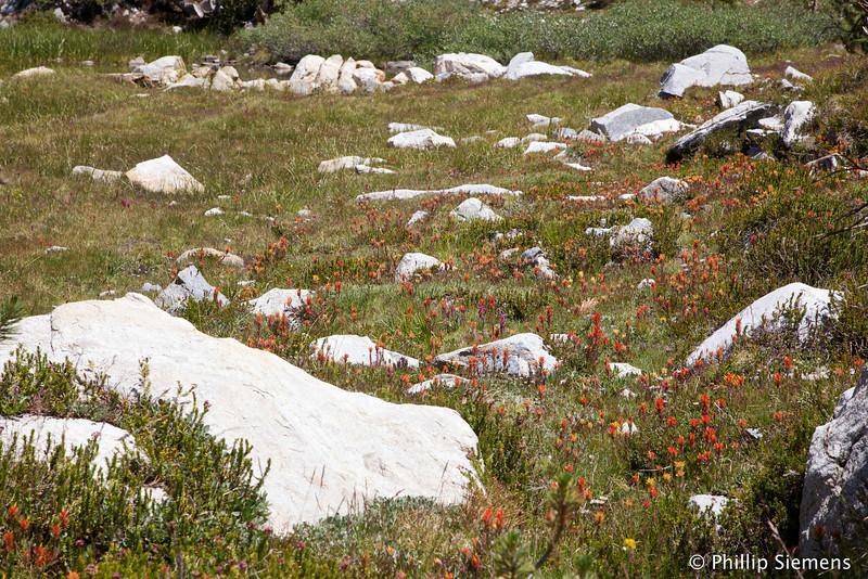 Flowers near Gem Lake
