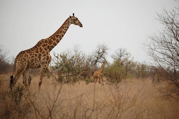 Kruger - Day 7 - Oct 19