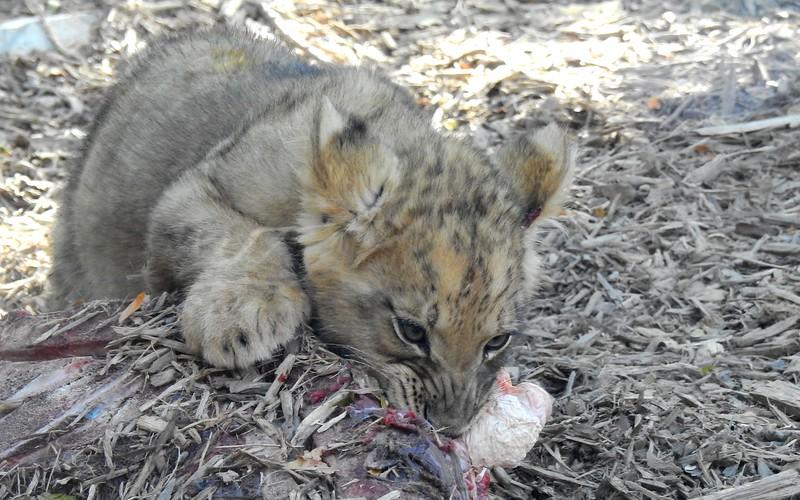 Denver Zoo 2019 (1167).JPG