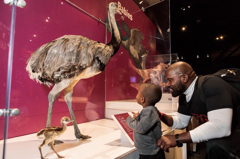 COSI-Dinosaurs-Exhibit-161.jpg