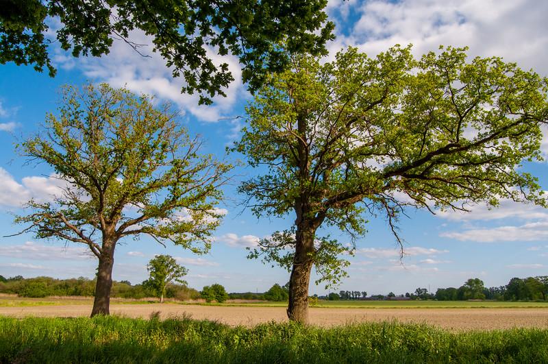 GrensPark Kempen~Broek, omgeving Stramprooierbroek & St.-Maartensheide 83.jpg