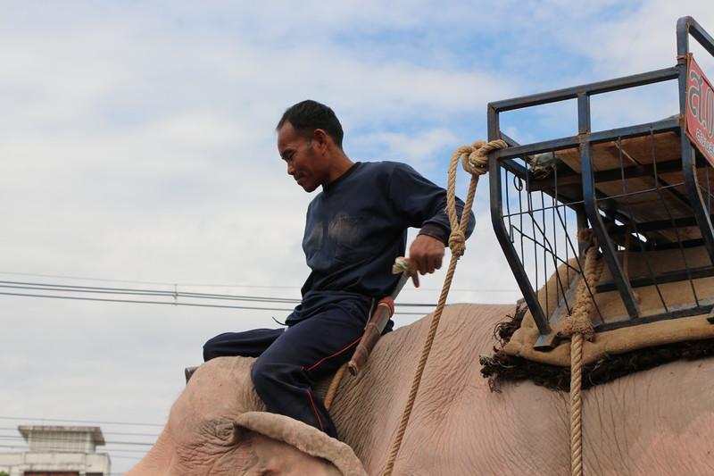 2014-11-14 Surin Elephant Welcome Feast 614.JPG