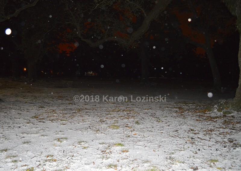 SnowyGrass.JPG