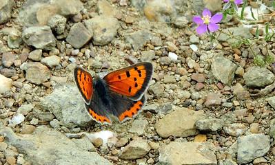 Portugal_04.2015_Nature