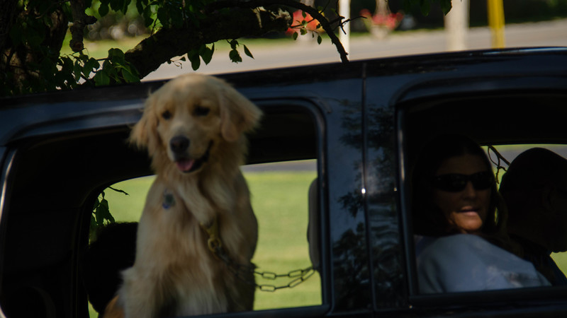 PuppyParty18-519.jpg