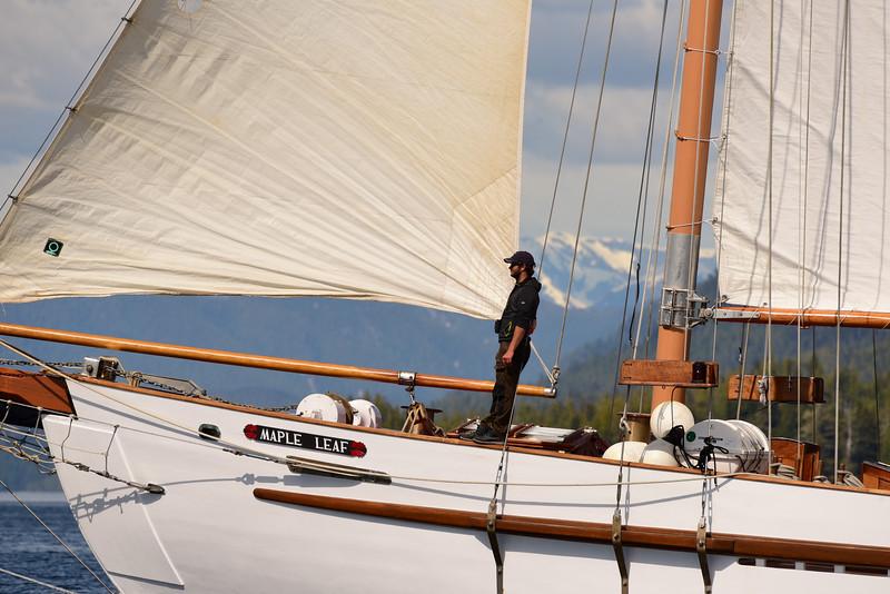 SailingMapleLeaf-GregShea.jpg