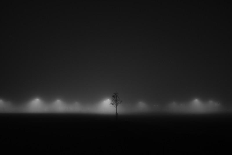 onetreelights.jpg