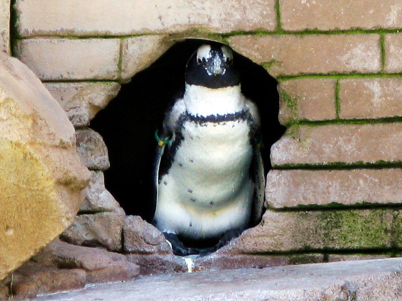 Penguins III - One In a Hole.jpg