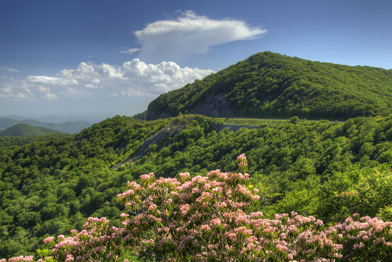 A few blooming rhododendron bushes with a view of a cut in the mountain at Craggy Gardens at Milepost 264.4 on the Blue Ridge Parkway in North Carolina on Monday, June 15, 2015. Copyright 2015 Jason Barnette