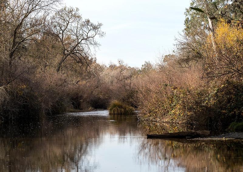 Putah creek.jpg
