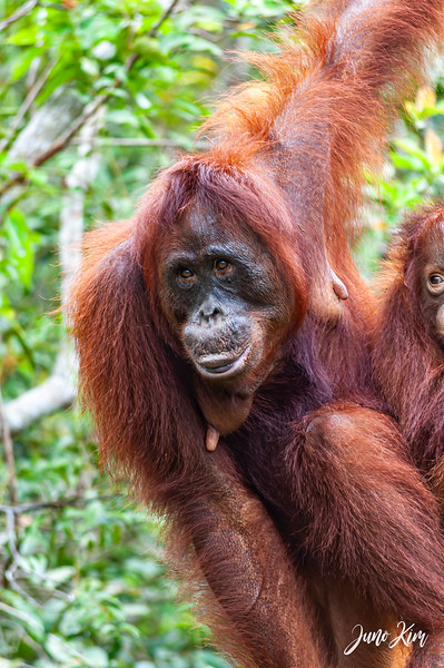 2012.10.07_Borneo_DSC_7068-Edit-Juno Kim.jpg