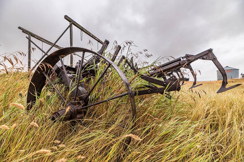 barley 25.jpg