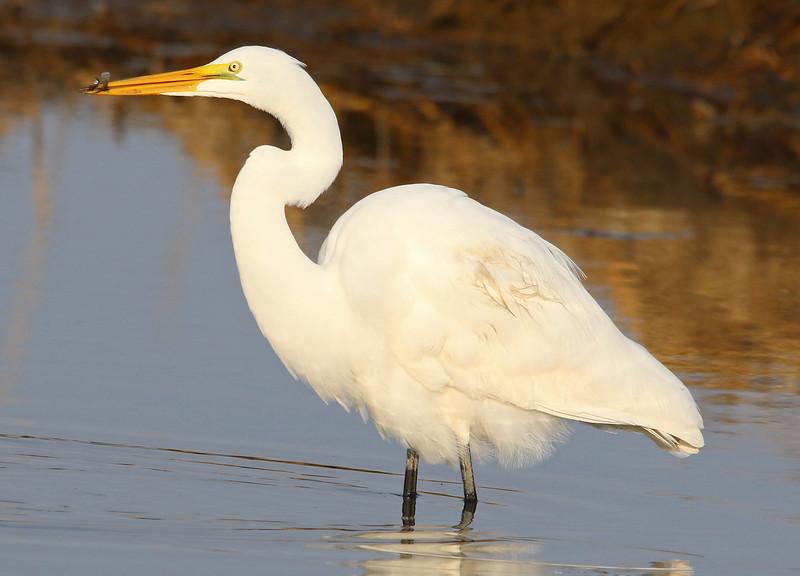 white egret water _edited-1.jpg
