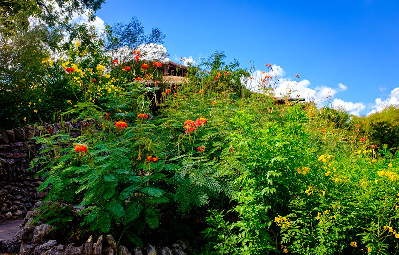 San Antonio Japanese Garden-5788.jpg