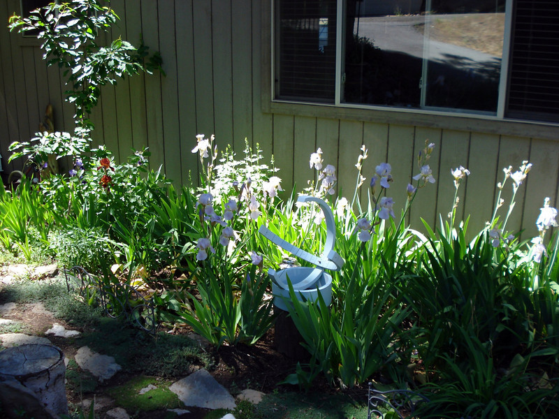 Front Garden 07-04-2010