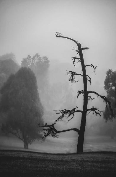 Koonung Creek Reserve - May