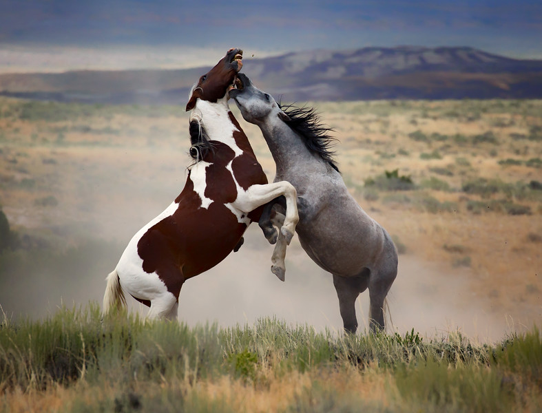 War Horses IX