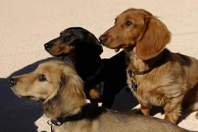 The Three Wieners