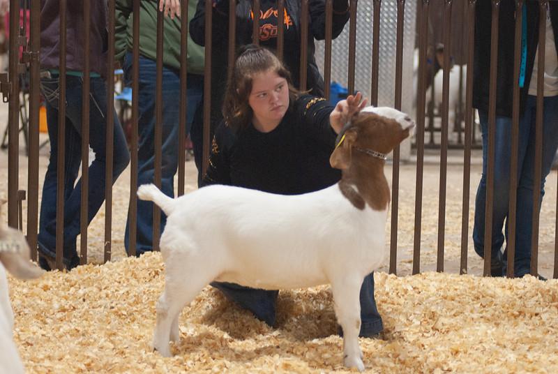 kay_county_showdown_goats_20191207-134.jpg