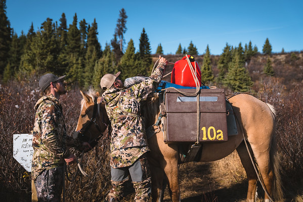 October Moose Hunt