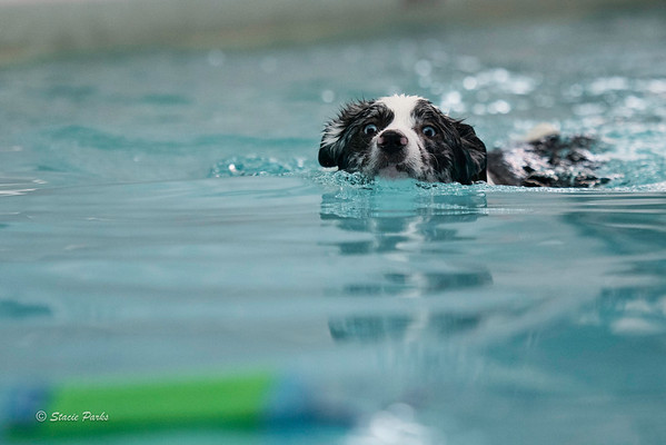 Splash your pup
