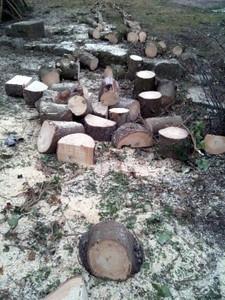 sawing03.jpg