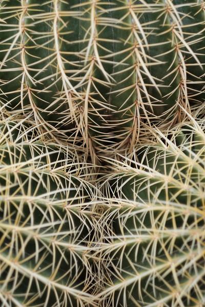 Tucson_17-692.jpg