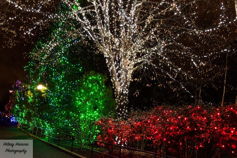 Christmas Lights-91.jpg