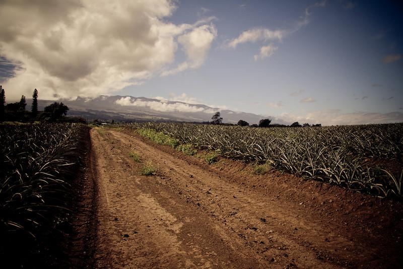 pineapple road plantation.jpg