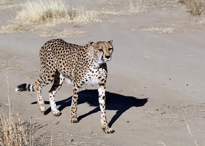 NAMIBIA - OKONJIMA AND NAANKUSE