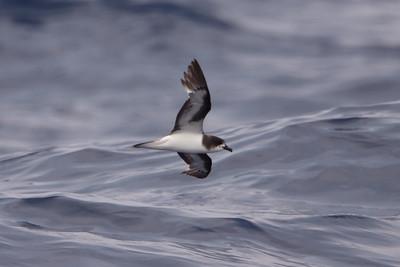 2009 Outer Banks Pelagics