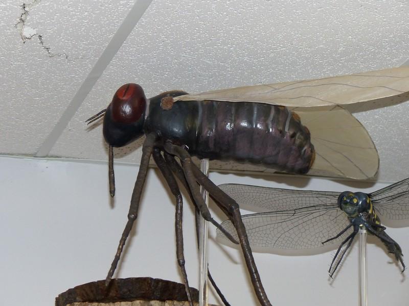 Huge Blackfly!