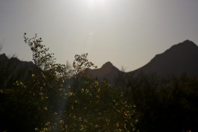 Arizona 2013