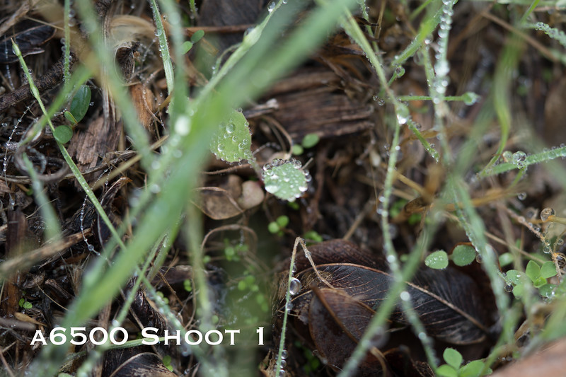 a6500 macro - Shoot 1-1.jpg