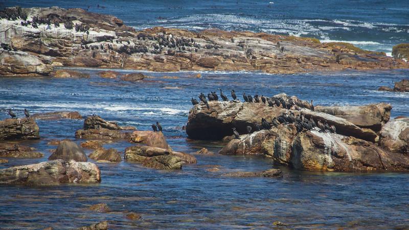 Trip to Cape Point-0292.jpg