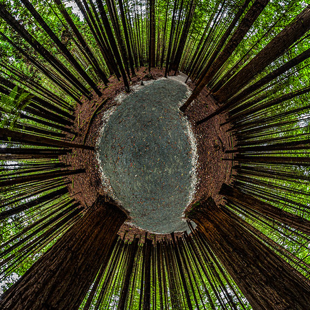 Rotorua Redwoods Tiny Planet Photos