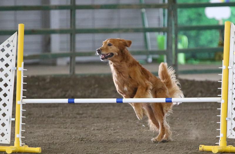 3-10-2019 Bloodhound-0630.jpg