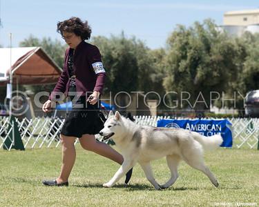 2009 Camellia Dog Show - Woodland, CA