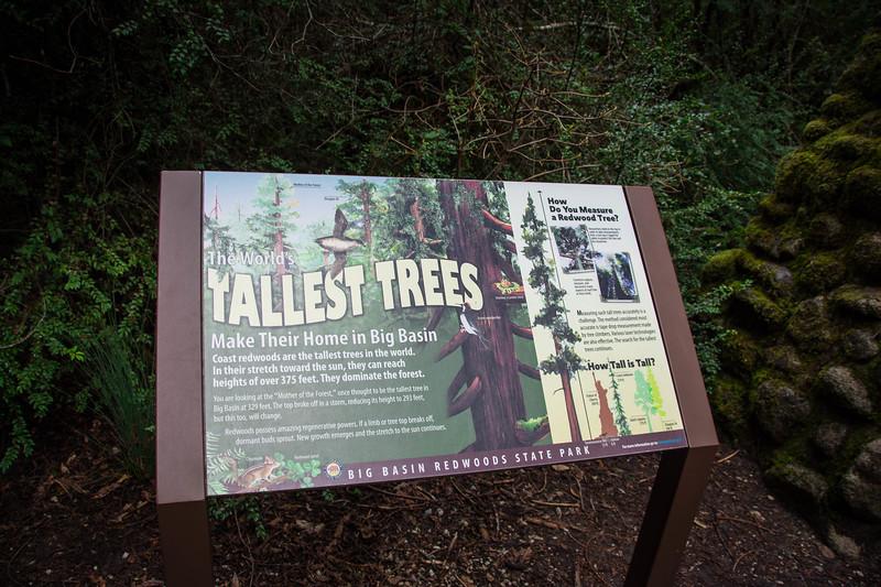 Redwood-52.jpg