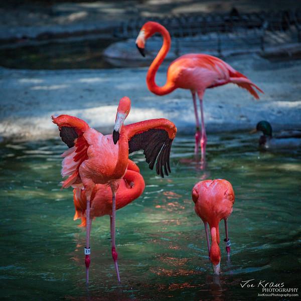 Angry Flamingo II