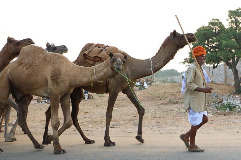 India-Pushkar-2019-7390.jpg