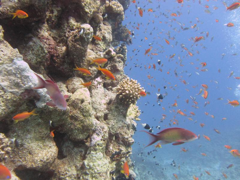 Sharm July_049.JPG